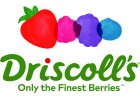 driscolls logo berry stack